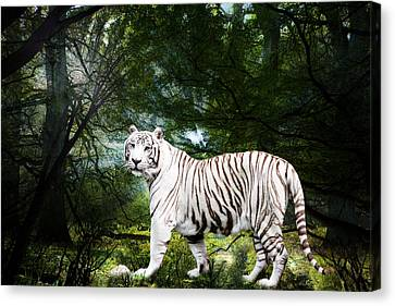 White Bengal Canvas Print by Elizabeth Hart