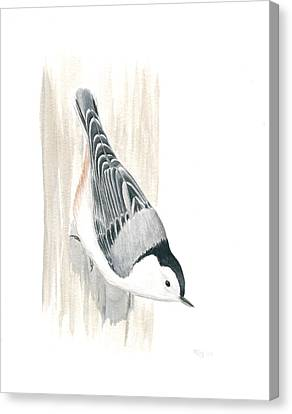 White-breasted Nuthatch Canvas Print by Anna Bronwyn Foley