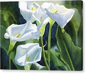 White Calla Lilies Canvas Print by Sharon Freeman