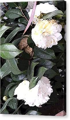 White Camellia Canvas Print by Mindy Newman