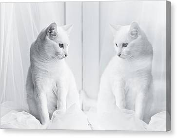White Cat Reflected In Window Canvas Print by Vilhjalmur Ingi Vilhjalmsson