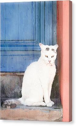 White Cat Canvas Print by Tom Gowanlock