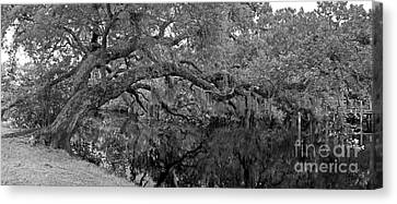 Canvas Print featuring the photograph White City Oak Pano by Larry Nieland