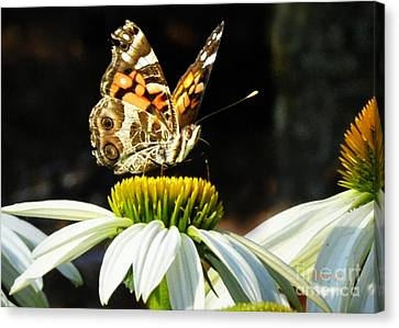 Canvas Print featuring the photograph White Cone Flower Visit by Nava Thompson