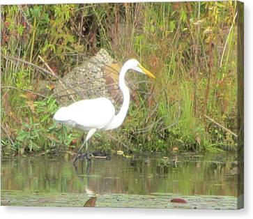 White Crane - Wildlife Canvas Print by Susan Carella
