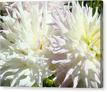 White Dahlia Flowers Art Prints Floral Canvas Print by Baslee Troutman