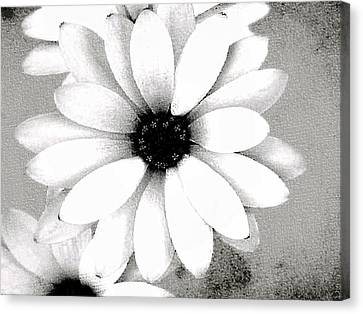 Canvas Print featuring the photograph White Daisy by Tammy Espino