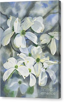 White Dogwood Canvas Print by Sharon Freeman