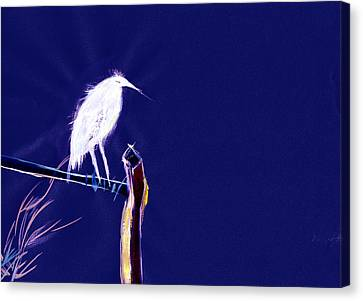 White Egret Canvas Print by Anil Nene