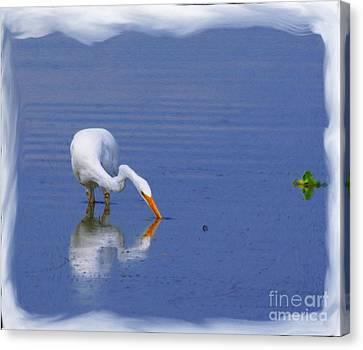 White Egret Hunting For A Fish Canvas Print by John  Kolenberg