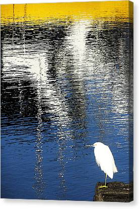 White Egret On Dock With Colorful Reflections Canvas Print by Anne Mott