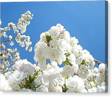 White Floral Blossoms Art Prints Spring Tree Blue Sky Canvas Print by Baslee Troutman