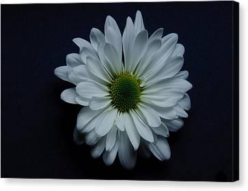 Ron Smith Canvas Print - White Flower 1 by Ron Smith
