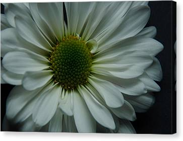 White Flower Canvas Print by Ron Smith