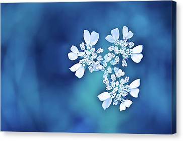 White Flowers In Blue Bokeh Canvas Print by Alexandre Fundone