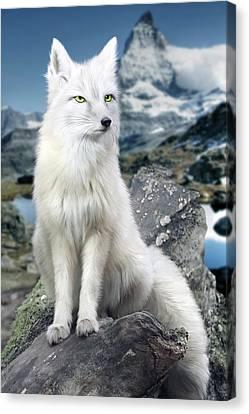 White Fox At Matterhorn Canvas Print