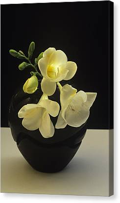 Canvas Print featuring the photograph White Freesias In Black Vase by Susan Rovira