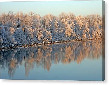 White Frost In Trees Canvas Print by Ralf Kaiser