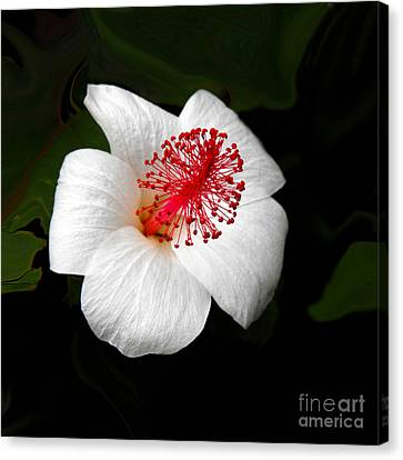 Canvas Print featuring the photograph White Hibiscus Flower by Rebecca Margraf