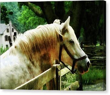 White Horse Closeup Canvas Print by Susan Savad