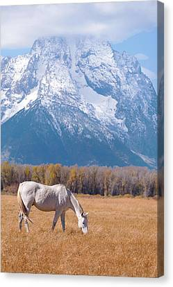 White Horse In Teton National Park Wy Usa Canvas Print by Chasing Light Photography Thomas Vela