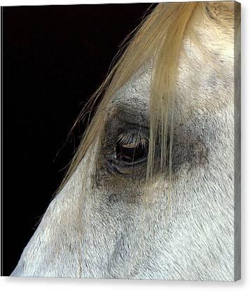 White Horse Canvas Print by Marmimuralla