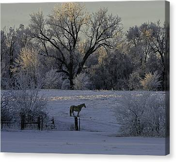 White Horse Winter Canvas Print by Kenneth McElroy