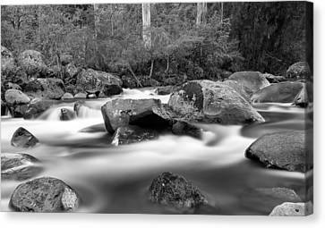 White In Black Canvas Print by Mark Lucey