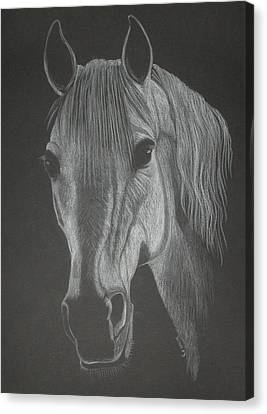 White Mare Canvas Print by Stephanie L Carr