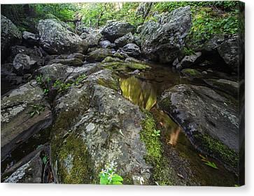 Oak Creek Canvas Print - White Oak Creek by Rick Berk