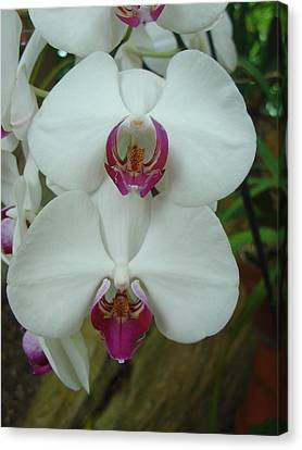 Canvas Print featuring the photograph White Orchid by Charles and Melisa Morrison