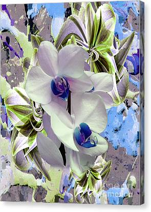 White Orchids And A Touch Of Blue Canvas Print by Doris Wood