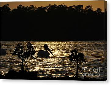 Canvas Print featuring the photograph White Pelican Evening by Dan Friend