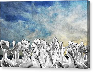 White Pelicans In Group Canvas Print by Dan Friend