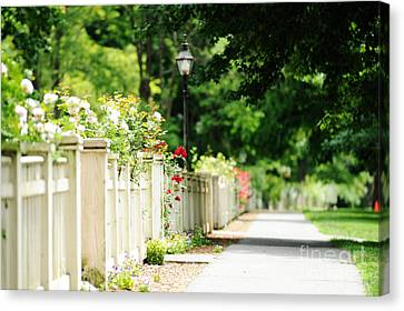 White Picket Fence And Roses Canvas Print