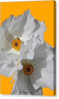 White Poppies On Yellow Canvas Print by Betty Northcutt