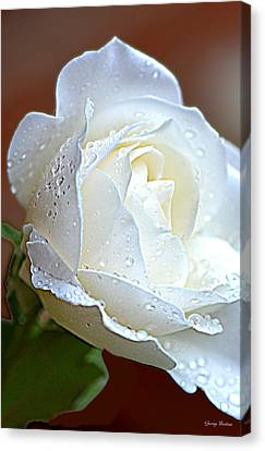 Canvas Print featuring the photograph White Rose 005 by George Bostian