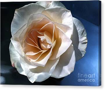 White Rose Canvas Print by Addie Hocynec