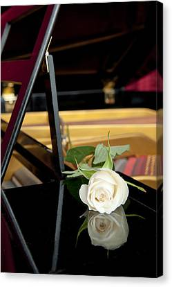 White Rose And Its Reflection Canvas Print by Corepics