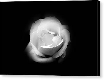 Canvas Print featuring the photograph White Rose Petals by Anthony Rego