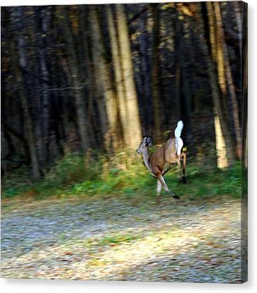 White Tail Running Deer Canvas Print