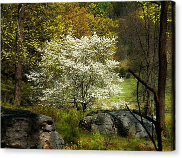 White Tree On The Mountain Canvas Print