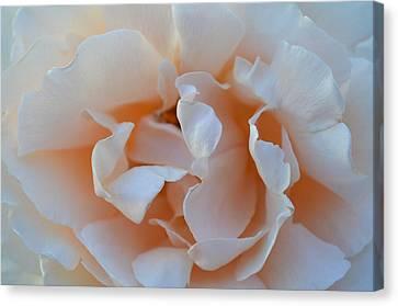 Whitest Rose Canvas Print by Naomi Berhane