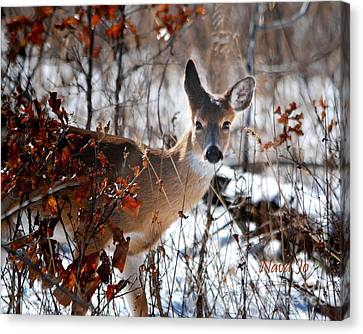 Whitetail Deer In Snow Canvas Print by Nava Thompson