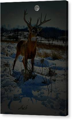 Whitetail Moon Canvas Print by Emily Stauring