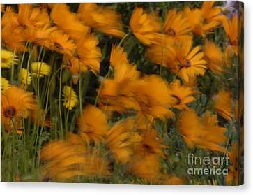 Who Has Seen The Wind Canvas Print by Bob Christopher