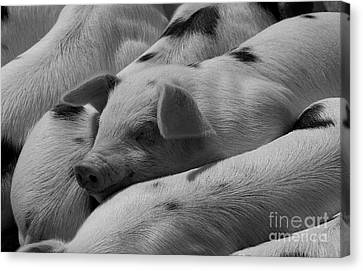Who Said More Than 2 Is A Crowd Canvas Print by Karl Thompson