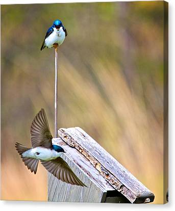Canvas Print featuring the photograph Who's The Boss by Joe Urbz