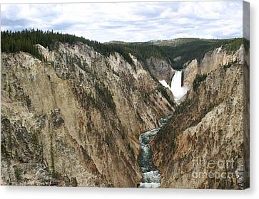 Wide View Of The Lower Falls In Yellowstone Canvas Print by Living Color Photography Lorraine Lynch