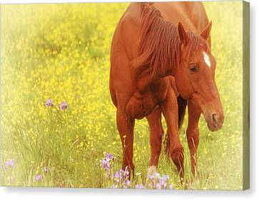 Wild As The Flowers Canvas Print by Karol Livote